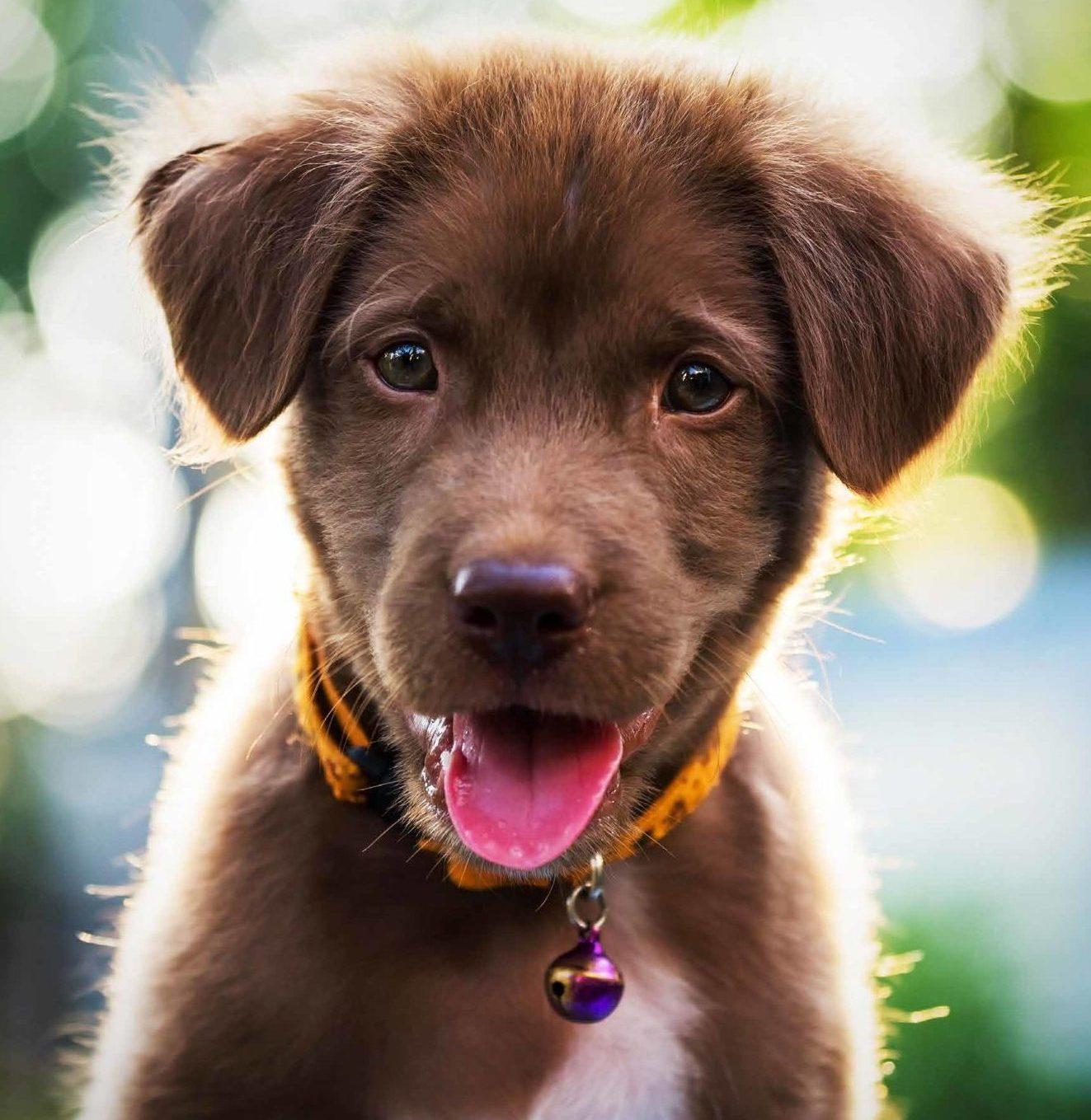 Xgroup skapar en bättre vardag för din hund genom digitalisering